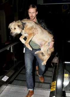 WOW. Ryan Gosling. This could be it. This right here: Leo, I'm sorry but... I've moved on. Even if I do get to work with you in less than 2 weeks time eeeeek!    #dogs #men #hot