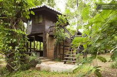 Treehouse at a yoga + meditation retreat in Chang Mai, Thailand.