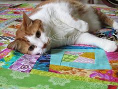 ❤ =^..^= ❤  Lucy ~ Quiltingartist: Pets on Quilts Show 2014 is here!!