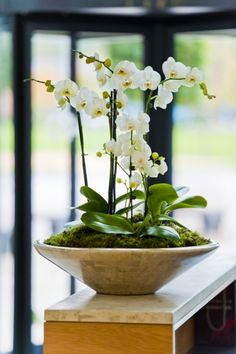 Orchids in large ceramic deskbowl on office reception Bath, Avon