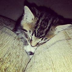 #cats #catstagram #kitten #kittensofinstagram #sleepingcat