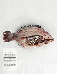NoButts.org, Anti-Cigarette Butt Pollution Campaign: Tilapia   Ads of the World™