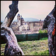 Urbino Photo by sonia18970