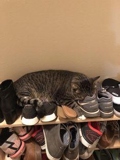 Found my cat sleeping like this lol by Ryanf1240