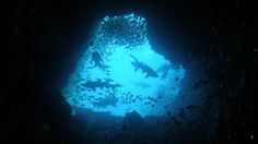 south west rocks diving - Google Search