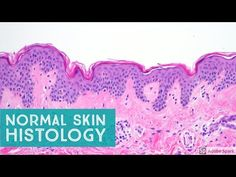 Normal Skin Histology - Explained by a Dermatopathologist - YouTube