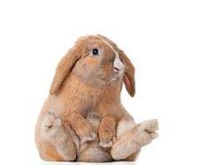 rabbit - Αναζήτηση Google