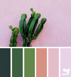 today's inspiration image for { cacti color } is by . thank you, Juj, for sharing your wonderful photo in ! Design Seeds, Colour Pallette, Color Combos, Color Schemes, Lush, Color Blending, Color Mixing, Pantone Verde, Cactus E Suculentas