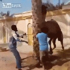 GIFsBOOM is your source for the best GIFs online. Find everything from funny GIFs, unique GIFs and more. Funny Shit, Funny Cute, The Funny, Funny Memes, Hilarious, Funny Gifs, Funny Animal Images, Funny Animals, Cute Animals
