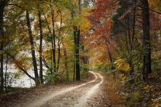Autumn Pathway Stock Image , #sponsored, #Pathway, #Autumn, #Image, #Stock #AD