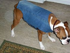 Dog denim coat made out of old jeans