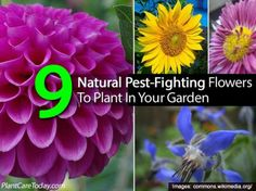 9 Natural Pest-Fighting Flowers To Plant In Your Garden