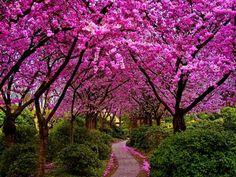 vacation travel photos - Spring walk