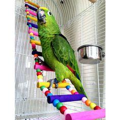 2015-recieacuten-llegado-de-aves-loro-colorido-escalera-de-escalada-juguete-osci