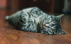 Pictures with cute cats 13