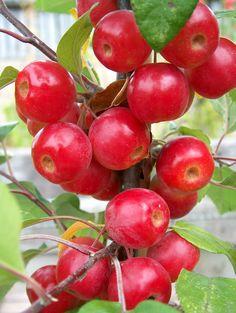 Organic nursery - fruit