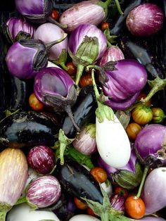 Eggplants, my fav food, cooked any way, they are always good. Lucky i can get heirloom varieties at the markets when they are in season.