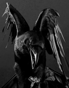 An Exquisite Paradox Trash Polka Rabe, Raven Pictures, Rabe Tattoo, Raven Bird, Adornos Halloween, Crow Art, Legends And Myths, Crows Ravens, Arte Horror