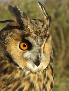 Nel corso delle iniziative di birdwatching organizzate dalla nostra associazione, punteremo il binocolo nel cielo per cogliere i differenti voli di questi animali affascinanti e li osserveremo nella Stazione di Inanellamento  a scopo scientifico gestita dall'ISPRA.