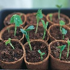 "For the beginning gardeners, here are some ""seed starting"" tips!"