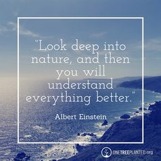"""""""Look deep into nature, and then you will understand everything better."""" Albert Einstein"""