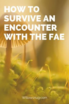 How to Survive an Encounter With the Fae - Willow Snug Types Of Witchcraft, Green Witchcraft, Fairytale Quotes, Baby Witch, Sea Witch, Eclectic Witch, Modern Witch, The Secret Book, Magical Creatures