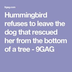Hummingbird refuses to leave the dog that rescued her from the bottom of a tree - 9GAG