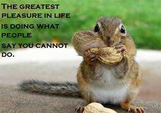 ambition squirrel