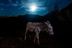Burro y luna