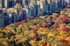 Il Central Park è un'oasi per gli abitanti di Manhattan ed è uno dei parchi cittadini più conosciuti grazie alle sue comparse in numerosi film e telefilm. E' assolutamente da non perdere duranti i magici mesi autunnali quando le foglie si tingono d'oro, rosso e arancione.