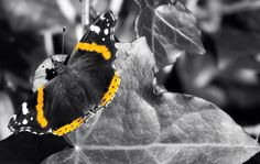 Butterfly @ Mt. Davidson #nature
