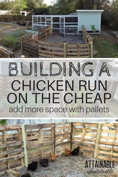 Building a chicken run from recycled pallets is a great way to create an inexpensive fence. Your hens will have more space to roam on your little homestead.