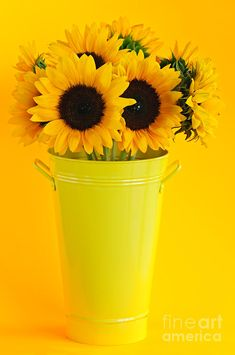 Yellow Mellow Sunflowers in vase