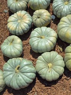 These heritage pumpkins will add interest to your fall decor.