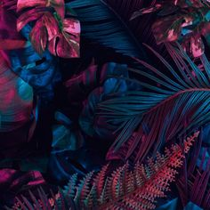 Unexpected Relationships, Botanical Wallpaper, The Real World, Artists Like, Trippy, Psychedelic, Plant Leaves, Illustration, Image