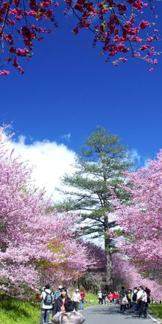 Spring time blossoms