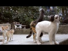 Istanbul's thousands of street cats are fed, sheltered and cooed at by an adoring public. Now the felines are becoming Travel News, Travel Hacks, Alley Cat, Daily Pictures, Photo Story, Animal Rescue, Cats And Kittens, Traveling By Yourself, Cute Animals