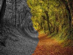 Walk throught the stunningly beautiful tree tunnel of Ashdown Forest in West Sussex Beautiful Forest, Beautiful World, Beautiful Places, Beautiful Pictures, Nature Pictures, Stunningly Beautiful, Amazing Photos, Beautiful Scenery, Beautiful Landscapes