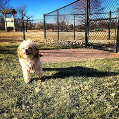 Big smile at Biscuit Acres Dog Park - Tulsa, OK - Angus Off-Leash