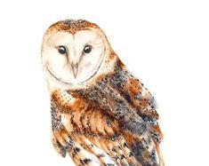 Owl Watercolour Print, Barn Owl Painting, Bird Art, Owl Print, Art Print, Owl Gifts, Owl Art Birds of Prey Wildlife Print, Nature Wall Art