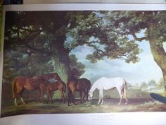 "Mares and Foals In A Wooded Landscape George Stubbs Print 20"" x 34"" Medici 1971"