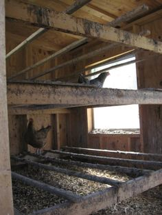Inside the chicken coop.