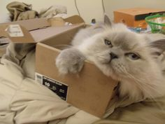 THIS JUST IN:  Cats Love Boxes