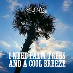 Palm trees and a cool breeze!