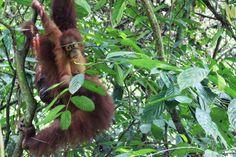 Bukit Lawang: Trekking im Gunung Leuser Nationalpark