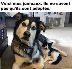 Chien et chat. ♥