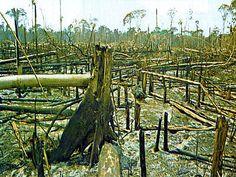 Veto parcial do Código Florestal desagrada ambientalistas