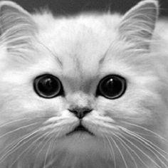 Nie ma okładki, ale i tak damy linka. Za każdym razem, kiedy jakiejś nie znajdę, będzie kotek. http://debiutext.co.pl/20129,pokolenia-wiek-deszczu-wiek-slonca-katarzyna-droga.html