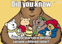 Did you know that each bear cub in the litter can have a different father? Funny Short Clips, Am Club, Bear Cubs, Funny Gifs, Different, Did You Know, Knowing You, Father, Snoopy
