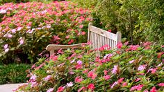 SunPatiens impatiens are flowers that flourish in sun or shade and are easy to plant. SunPatiens are easy to grow and require little maintenance.